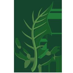 leafpetal